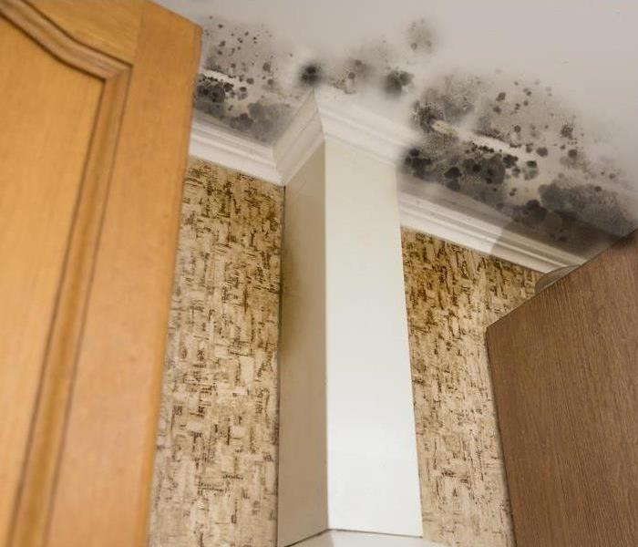 Water and Mold on Ceiling in a Kitchen